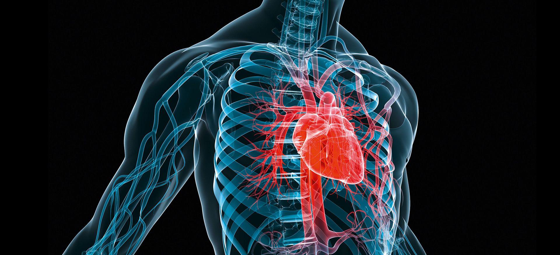 Herz-, Thorax- und Gefäßchirurgie